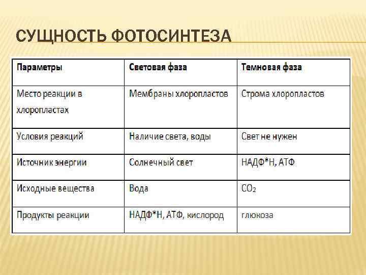 СУЩНОСТЬ ФОТОСИНТЕЗА
