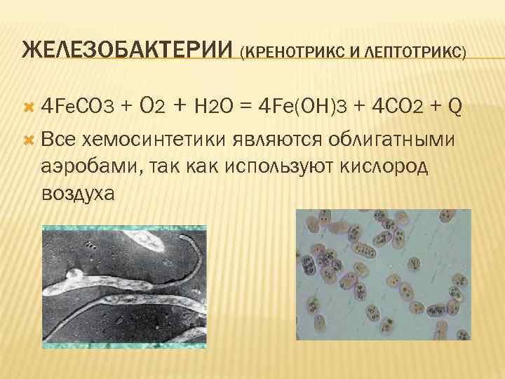 ЖЕЛЕЗОБАКТЕРИИ (КРЕНОТРИКС И ЛЕПТОТРИКС) + O 2 + H 2 O = 4 Fe(OH)3