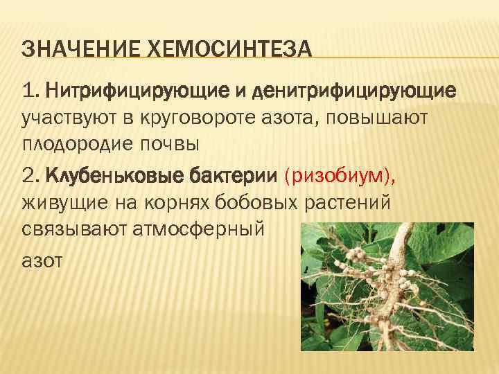 Фотосинтез и азот в растениях них нет