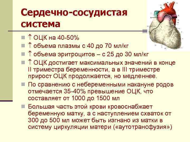 Сердечно-сосудистая система ОЦК на 40 -50% объема плазмы с 40 до 70 мл/кг объема
