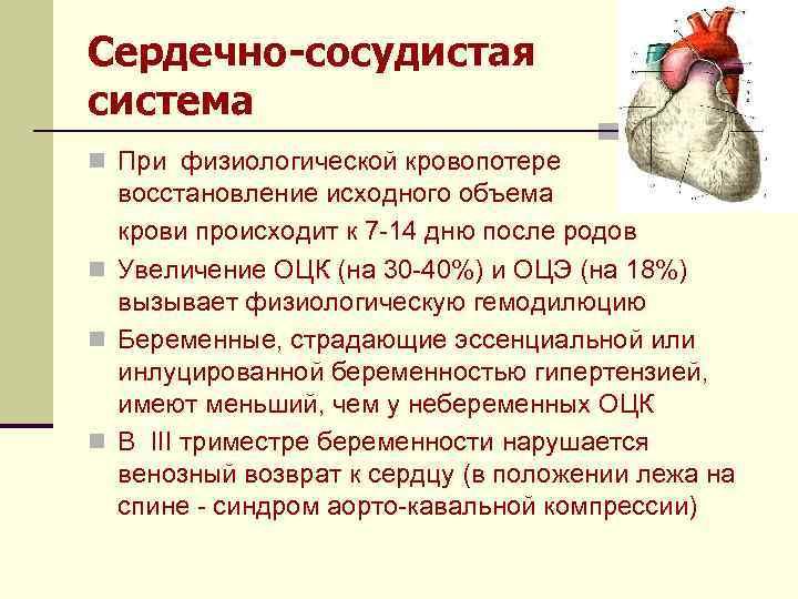 Сердечно-сосудистая система n При физиологической кровопотере восстановление исходного объема крови происходит к 7 -14