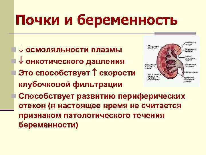 Почки и беременность n осмоляльности плазмы n онкотического давления n Это способствует скорости клубочковой