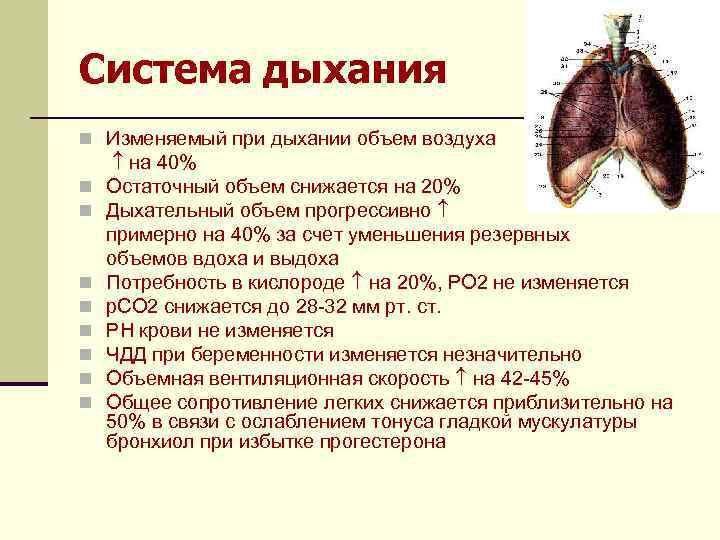 Система дыхания n Изменяемый при дыхании объем воздуха n n n n на 40%