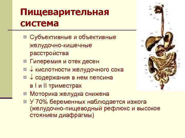 Пищеварительная система n Субъективные и объективные n n n желудочно-кишечные расстройства Гиперемия и отек