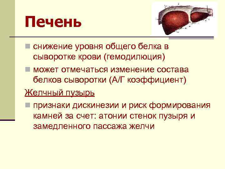 Печень n снижение уровня общего белка в сыворотке крови (гемодилюция) n может отмечаться изменение
