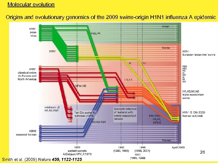 Molecular evolution Origins and evolutionary genomics of the 2009 swine-origin H 1 N 1