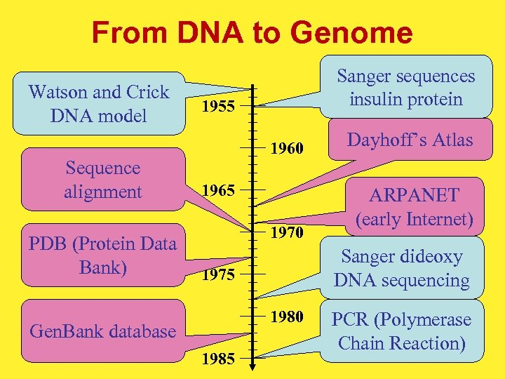From DNA to Genome Watson and Crick DNA model Sequence alignment PDB (Protein Data