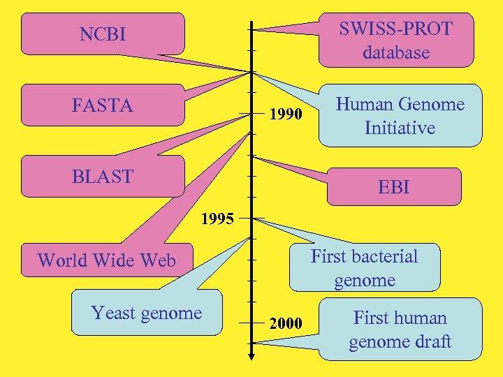 SWISS-PROT database NCBI FASTA 1990 BLAST Human Genome Initiative EBI 1995 First bacterial genome