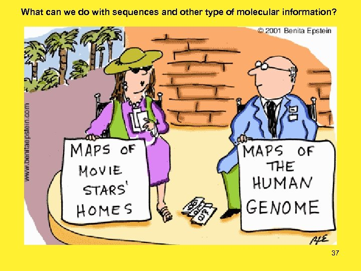 What can we do with sequences and other type of molecular information? 37