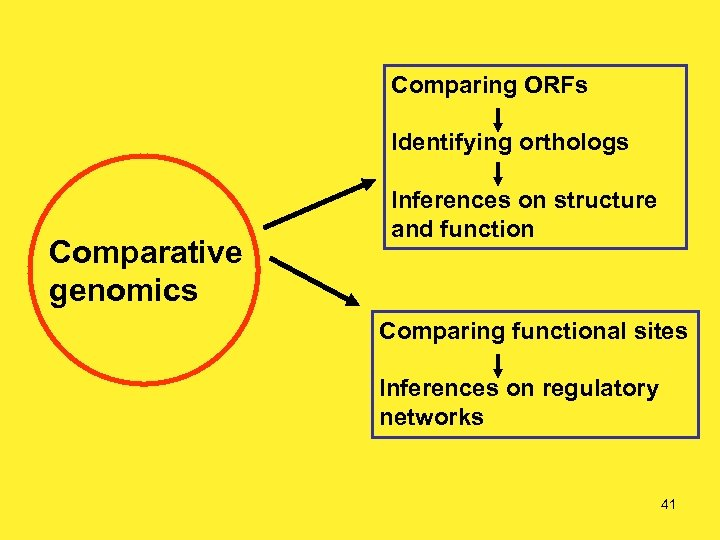 Comparing ORFs Identifying orthologs Comparative genomics Inferences on structure and function Comparing functional sites