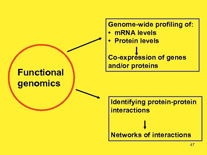 Genome-wide profiling of: • m. RNA levels • Protein levels Functional genomics Co-expression of