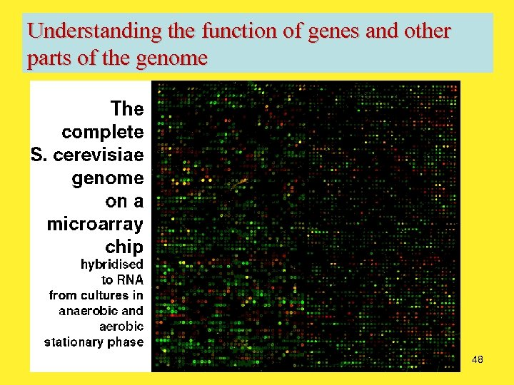 Understanding the function of genes and other parts of the genome 48