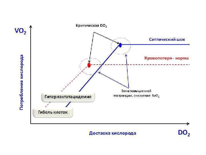 Потребление кислорода Доставка кислорода Куликов А. В.