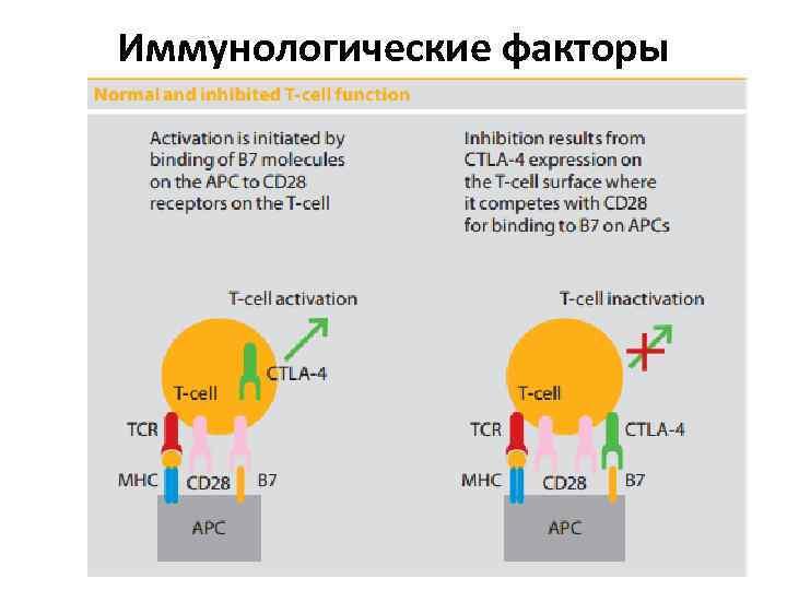 Иммунологические факторы