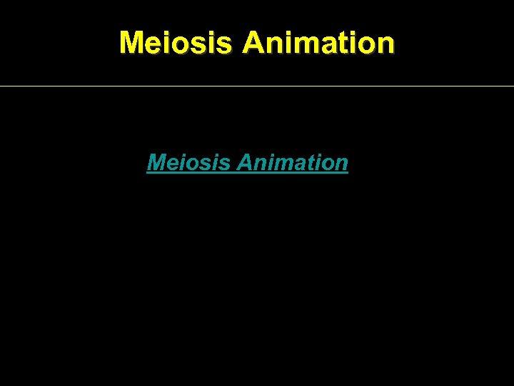 Meiosis Animation