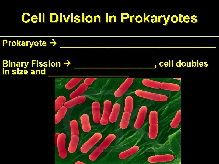 Cell Division in Prokaryotes Prokaryote _________________ Binary Fission _________, cell doubles in size and