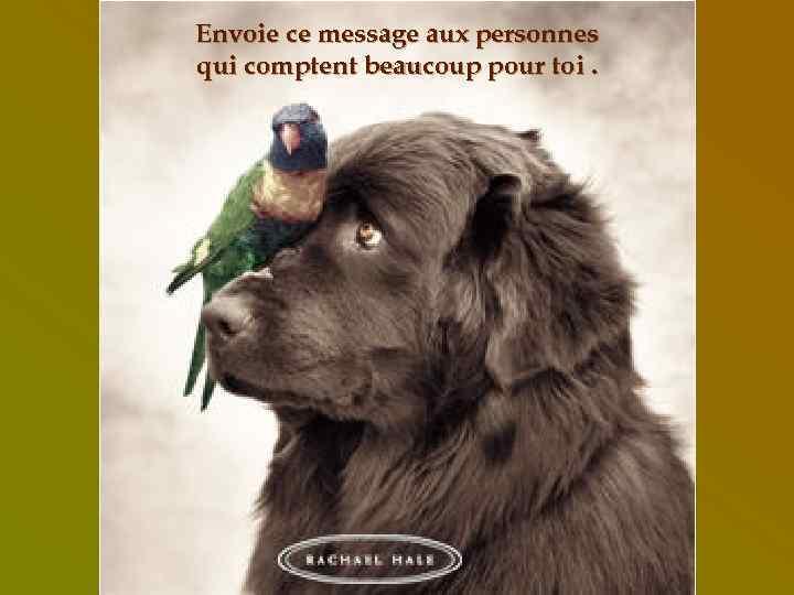 Envoie ce message aux personnes qui comptent beaucoup pour toi.