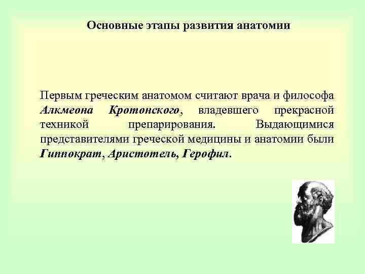 Основные этапы развития анатомии Первым греческим анатомом считают врача и философа Алкмеона Кротонского, владевшего
