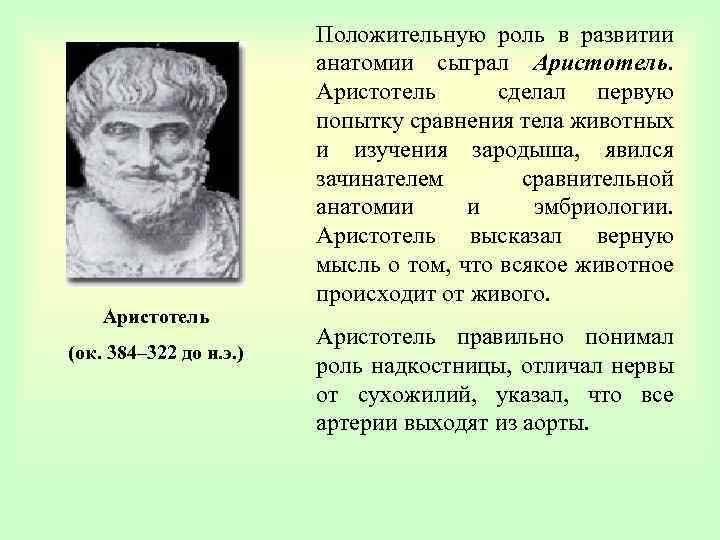 Аристотель (ок. 384– 322 до н. э. ) Положительную роль в развитии анатомии сыграл