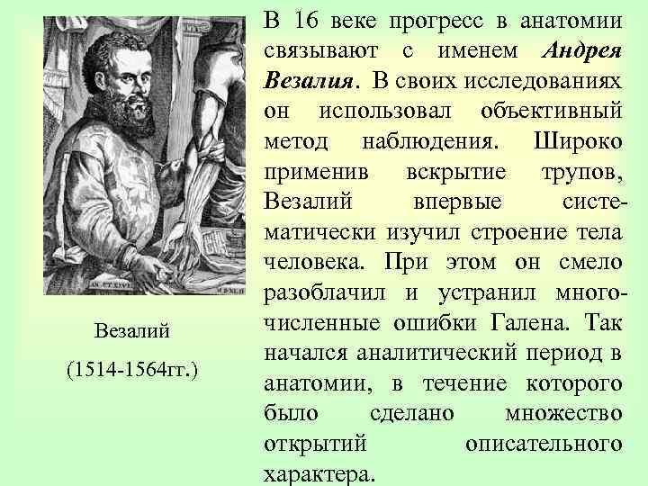 Везалий (1514 -1564 гг. ) В 16 веке прогресс в анатомии связывают с именем