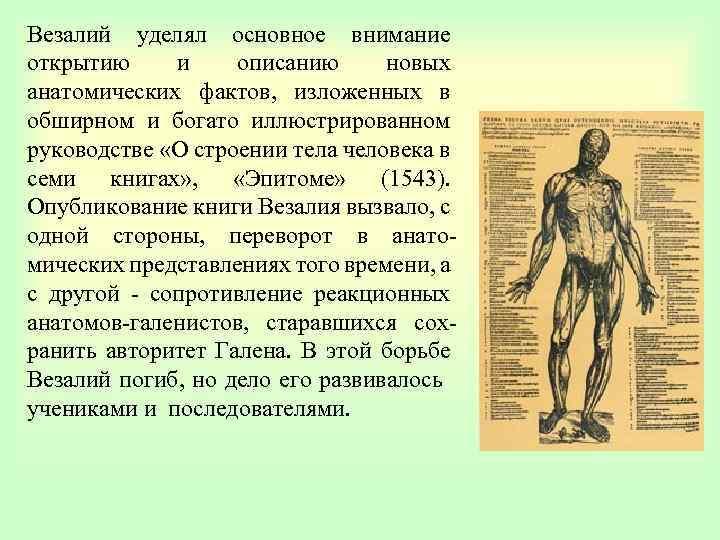 Везалий уделял основное внимание открытию и описанию новых анатомических фактов, изложенных в обширном и