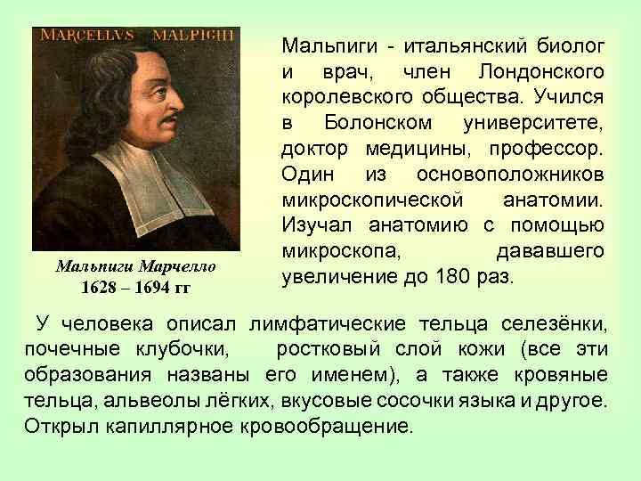 Мальпиги Марчелло 1628 – 1694 гг Мальпиги - итальянский биолог и врач, член Лондонского
