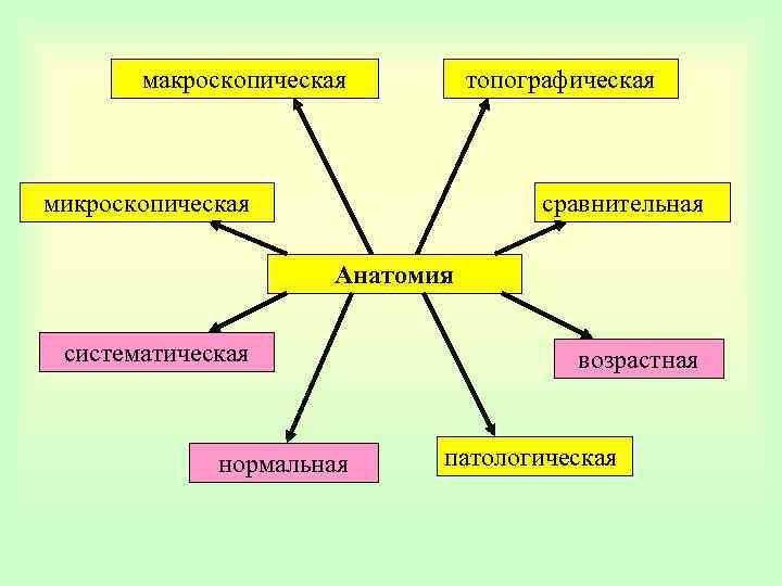 макроскопическая топографическая микроскопическая сравнительная Анатомия систематическая нормальная возрастная патологическая