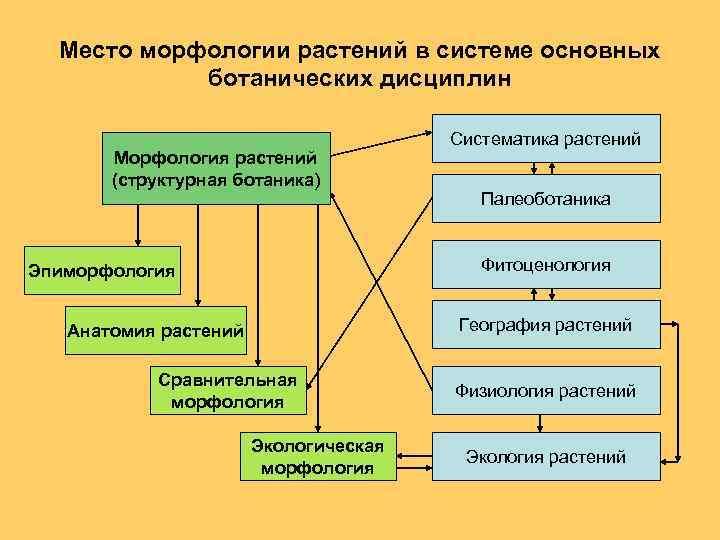 Место морфологии растений в системе основных ботанических дисциплин Морфология растений (структурная ботаника) Систематика растений