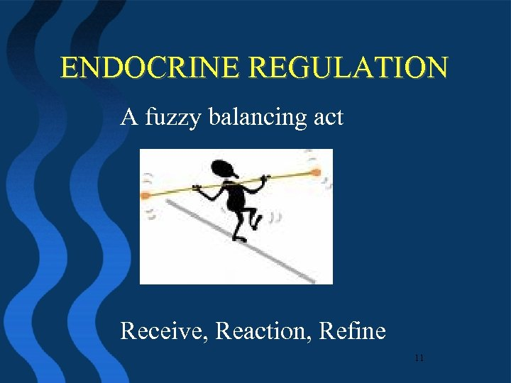 ENDOCRINE REGULATION A fuzzy balancing act Receive, Reaction, Refine 11