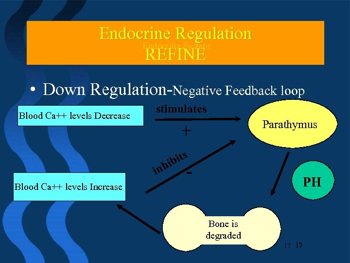 Endocrine Regulation Endocrine System Endocrine. System REFINE • Down Regulation-Negative Feedback loop Blood Ca++