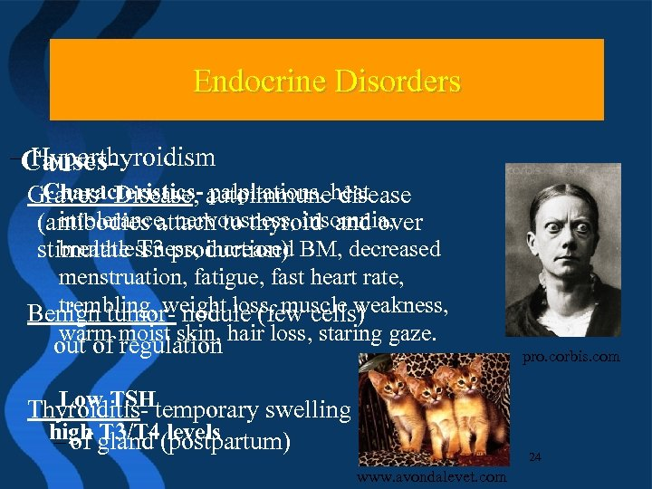 Endocrine Disorders –Causes. Hyperthyroidism Characteristics- palpitations, disease Graves' Disease, autoimmuneheat intolerance, nervousness, insomnia, (antibodies