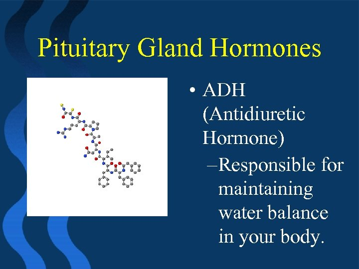Pituitary Gland Hormones • ADH (Antidiuretic Hormone) – Responsible for maintaining water balance in
