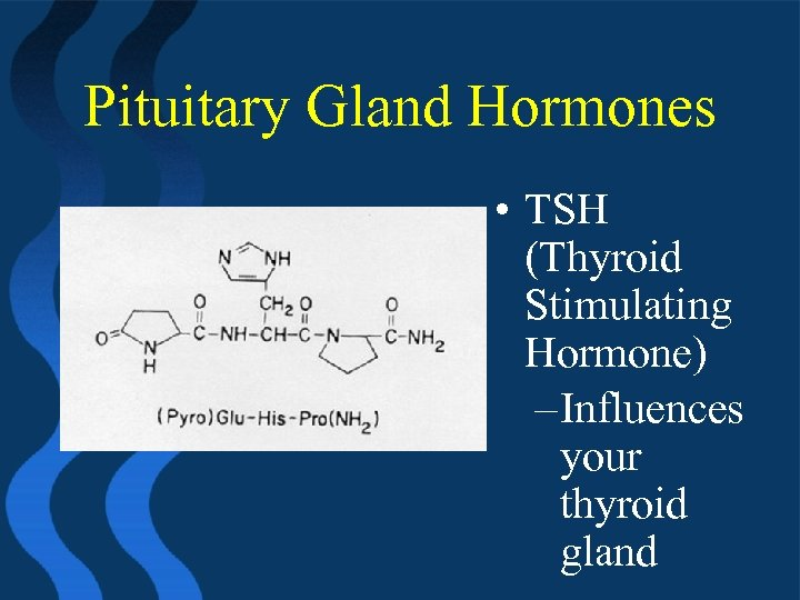 Pituitary Gland Hormones • TSH (Thyroid Stimulating Hormone) – Influences your thyroid gland