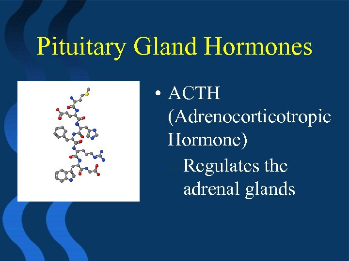 Pituitary Gland Hormones • ACTH (Adrenocorticotropic Hormone) – Regulates the adrenal glands
