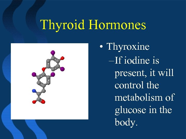 Thyroid Hormones • Thyroxine – If iodine is present, it will control the metabolism