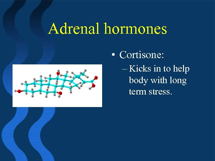 Adrenal hormones • Cortisone: – Kicks in to help body with long term stress.