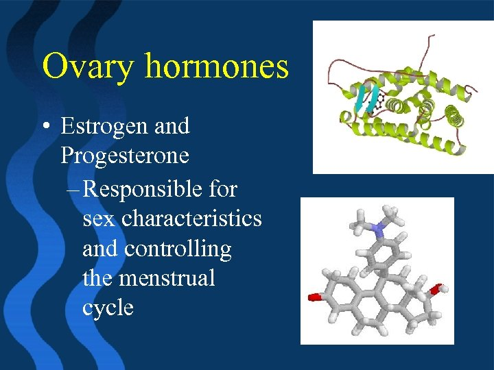 Ovary hormones • Estrogen and Progesterone – Responsible for sex characteristics and controlling the