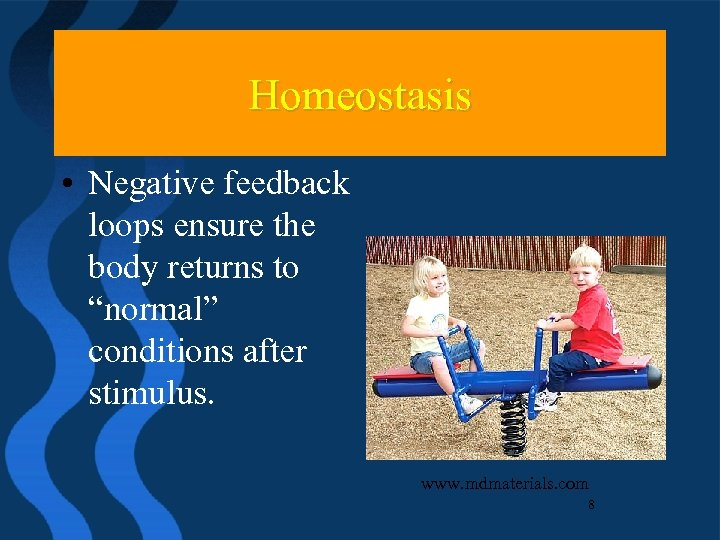 "Homeostasis • Negative feedback loops ensure the body returns to ""normal"" conditions after stimulus."