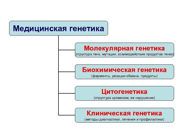 Медицинская генетика Молекулярная генетика (структура гена, мутации, взаимодействие продуктов генов) Биохимическая генетика (ферменты, реакции