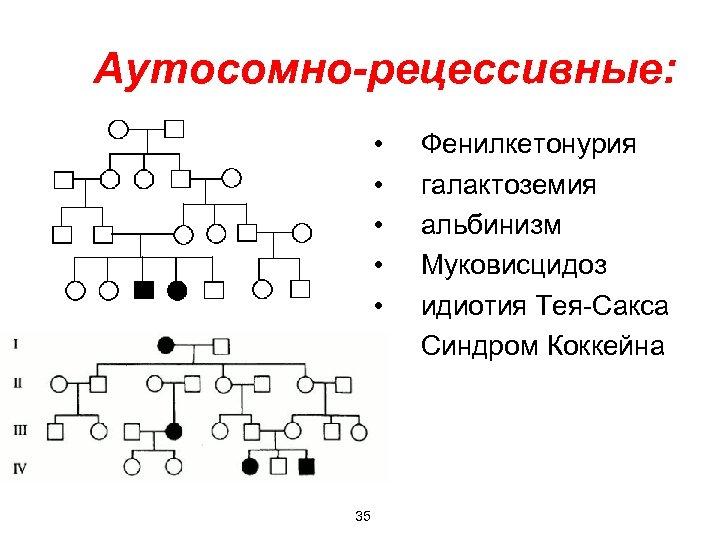 Аутосомно-рецессивные: • • • 35 Фенилкетонурия галактоземия альбинизм Муковисцидоз идиотия Тея-Сакса Синдром Коккейна