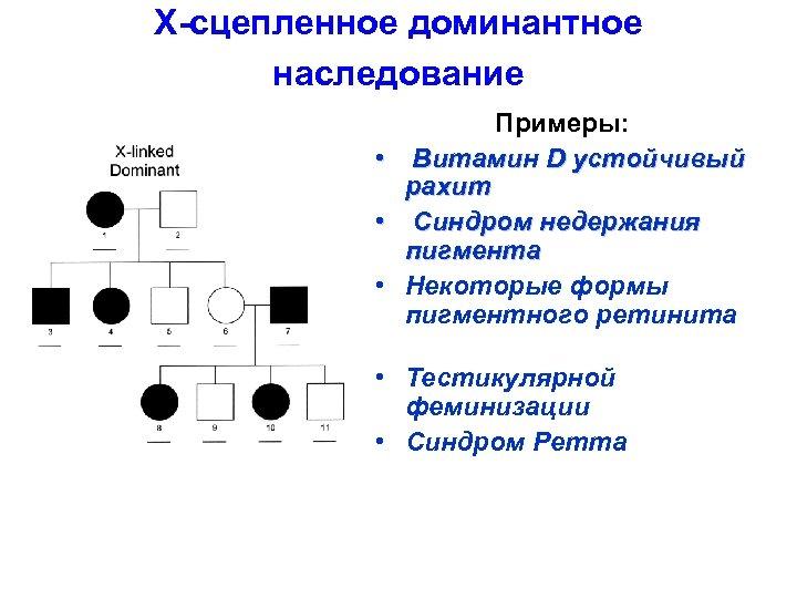 X-сцепленное доминантное наследование • • • Примеры: Витамин D устойчивый рахит Синдром недержания пигмента