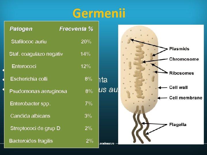 Germenii Patogen Frecventa % Stafilococ auriu Staf. coagulazo negativ Enterococi 20% 14% 12% •