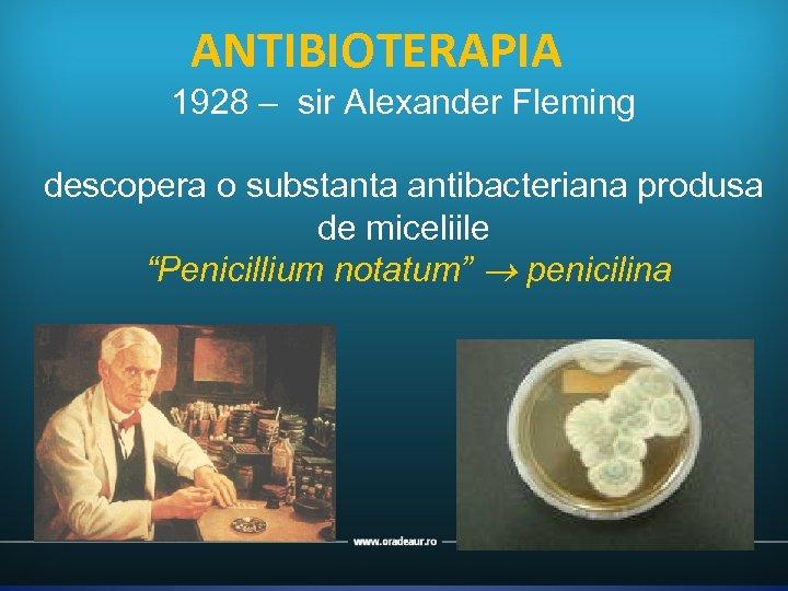 "ANTIBIOTERAPIA 1928 – sir Alexander Fleming descopera o substanta antibacteriana produsa de miceliile ""Penicillium"
