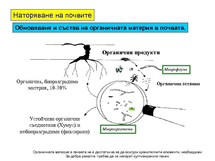 Наторяване на почвите Обновяване и състав на органичната материя в почвата. Органични продукти Макрофауна