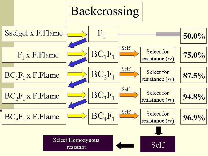 Backcrossing Sselgel x F. Flame F 1 x F. Flame BC 1 F 1