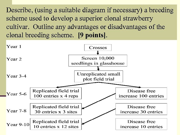 Describe, (using a suitable diagram if necessary) a breeding scheme used to develop a