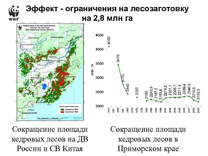 Эффект - ограничения на лесозаготовку на 2, 8 млн га Сокращение площади кедровых лесов