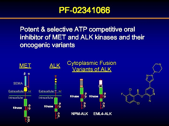 PF-02341066 Potent & selective ATP competitive oral inhibitor of MET and ALK kinases and