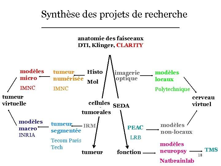 Synthèse des projets de recherche anatomie des faisceaux DTI, Klinger, CLARITY modèles micro IMNC