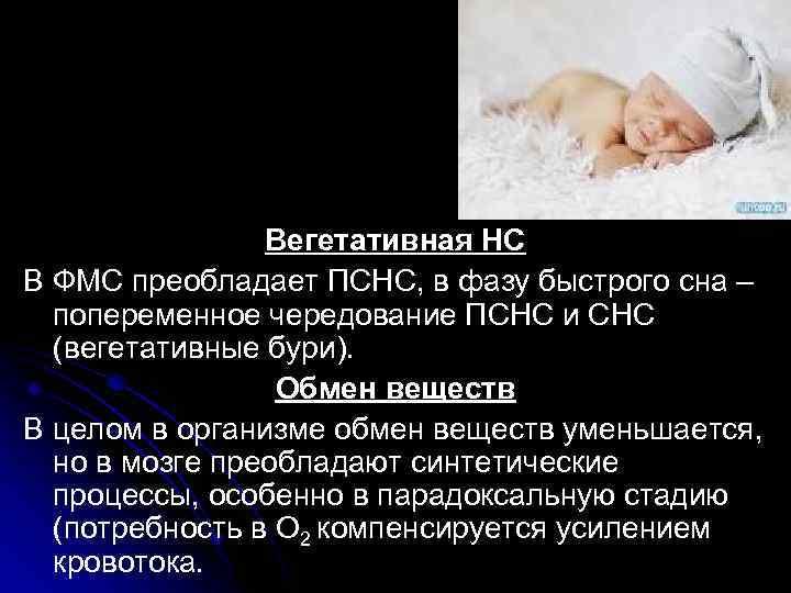 Вегетативная НС В ФМС преобладает ПСНС, в фазу быстрого сна – попеременное чередование ПСНС